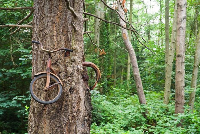 Bicycle Eaten by A Tree On Vashon Island Washington, , nature reclaiming abandoned places, nature abandonned places