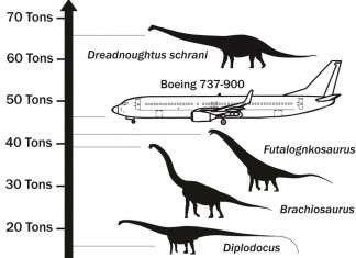 Dreadnoughtus largest dinosaur, what is the largest dinosaur on earth, Dreadnoughtus is largest dinosaur on earth, Dreadnoughtus video, Dreadnoughtus dinosaur, Dreadnoughtus - The Largest Dinosaur on Earth, largest dinosaur, largest dinosaur on earth, Dreadnoughtus - The Largest Dinosaur on Earth in comparison to other animals and dinosaurs.