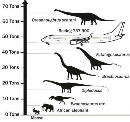Dreadnoughtus largest dinosaur, what is the largest dinosaur on earth, Dreadnoughtus is largest dinosaur on earth, Dreadnoughtus video, Dreadnoughtus dinosaur, Dreadnoughtus - The Largest Dinosaur on Earth, largest dinosaur, largest dinosaur on earth, Dreadnoughtus - The Largest Dinosaur on Earth in comparison to other animals and dinosaurs, dinosaur, archeology, fossil, mega dinosaur, video, Discover Dreadnoughtus - The largest dinosaur on Earth. Watch this amazing video about this gigantic and exceptionally complete Sauropod dinosaur fossil