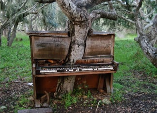 tree in old piano in california, piano tree, piano tree photo, Old Piano Tree, Old Piano Tree in California
