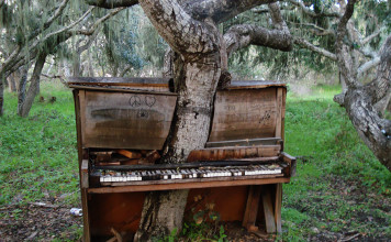 tree in old piano in california, piano tree, piano tree photo, Old Piano Tree, Old Piano Tree in California