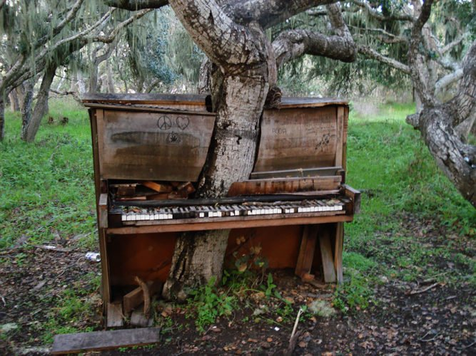 tree in old piano in california, piano tree, piano tree photo, Old Piano Tree, Old Piano Tree in California, , nature reclaiming abandoned places, nature abandonned places
