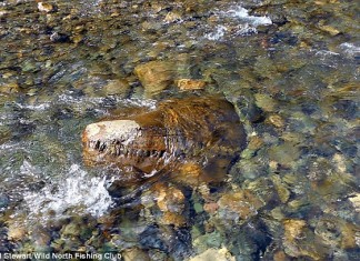 ancient monster siberia, ancient monster siberia discovered in Siberia, siberia monster river, river siberia monster, smilling monster siberia, Fisherman in Siberia claim to have found remarkably intact remains of an ancient lizard (shown). They supposedly found the crocodile-like head while on a fishing trip. And when they sent photos to experts they were told it was likely a lizard or dinosaur from 150 million years ago, anacient lizard found in siberian river, ancient skull in russian river