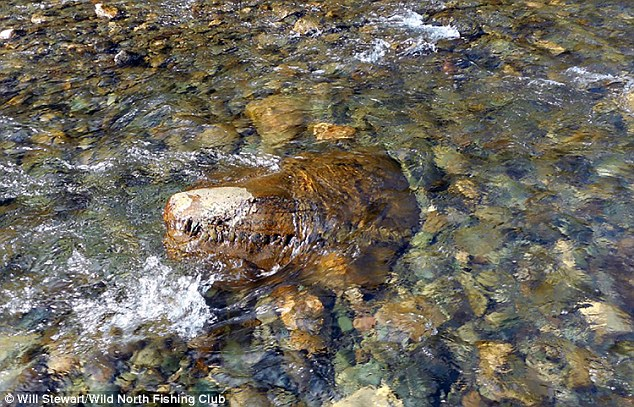 ancient monster siberia, ancient monster siberia discovered in Siberia, siberia monster river, river siberia monster, smilling monster siberia, Fisherman in Siberia claim to have found remarkably intact remains of an ancient lizard (shown). They supposedly found the crocodile-like head while on a fishing trip. And when they sent photos to experts they were told it was likely a lizard or dinosaur from 150 million years ago, anacient lizard found in siberian river, ancient skull in russian river, mystery, ancient skull, yamal peninsula, ancient lizard, ancien dinosaur
