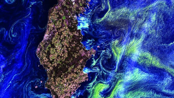 earth from space, earth from space photo, satellite images from earth, best earth from space photo, Gotland Island, in the Baltic Sea, is surrounded by swirling green clouds of microscopic phytoplankton. (NASA/GSFC/USGS EROS Data Center)
