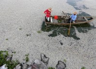 fish mass die-off, fish kill, mysterious fish kill jalisco mexico, fish mass die-off mexico, fish mass die-off mexico jalisco, fish mass die-off mexico lake cajititlan, Fifty tons of fish have washed up dead on the shores of Jalisco's Lake Cajititlan in Mexico. Photo: EPA