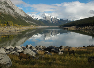 Medicine lake, Medicine lake mystery, Medicine lake oddity, Medicine lake jasper, Medicine lake mystery jasper national park, Medicine lake mystery in Jasper National Park, Canada. In summer, the lake is full of melting water. Photo: flickr