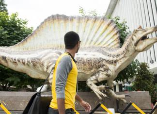 Spinosaurus, Spinosaurus: the largest predatory dinosaur, largest predatory dinosaur, largest predatory dinosaur: spinosaurus, Spinosaurus dinosaur, Spinosaurus replica at National Geographic. This is the largest predatory dinosaur to ever roam the Earth. Photo: Bill Clark