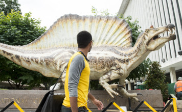 Spinosaurus, Spinosaurus: the largest predatory dinosaur, largest predatory dinosaur, largest predatory dinosaur: spinosaurus, Spinosaurus dinosaur, Spinosaurus replica at National Geographic. This is the largest predatory dinosaur to ever roam the Earth. Photo: Bill Clark