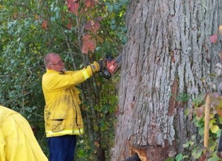 bear cubs trapped in tree, bear cubs trapped in tree wisconsin, bear cubs trapped in tree video, bear cubs trapped in tree wisconsin video october 204, bear cubs trapped in tree october 2014, bear cubs freed from tree in wisconsin, Officials from the Wisconsin Department of Natural Resources rescuing bear cubs trapped in a tree.