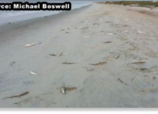 dead sharks, shark mass die-off, dead shark oak island NC, NC dead shark video, 50 sharks wash ashore on Oak Island North carolina, mysterious shark mass die-off in North California, shark killed on oak island october 2014, 50 dead sharks found on oak island in North Carolina, Picture of dead sharks found on Oak Island in North Carolina. The cause of their death is still a mystery. Photo: Youtube video