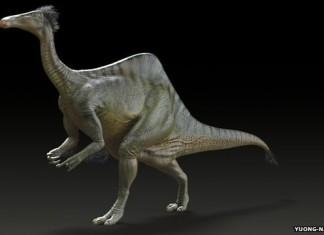 dinosaur mystery Deinocheirus mirificus, dinosaur, dinosaur mystery, Deinocheirus mirificus, mysterious Deinocheirus mirificus, amazing Deinocheirus mirificus, dinosaur mystery solved: Deinocheirus mirificus, Deinocheirus mirificus mystery solved, mystery of dinosaur with giant arms solved, giant arms dinosaur mystery Deinocheirus mirificus, The weird and curious Deinocheirus mirificus