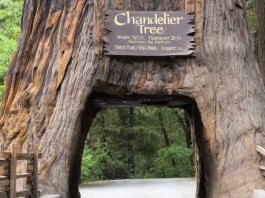 tree sounds, tree sounds thirsty, Trees make noise when they are thirsty tree noise thristy tree noise, thirsty tree sounds, tree sound drought, drought tree sounds trees produce sounds during drought, stressed trees sounds