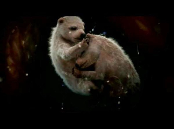 unborn bears, unborn bears photo, unborn bears photo mother womb, mother womb unborn animal image, Photo of unborn bears in theirmother's womb