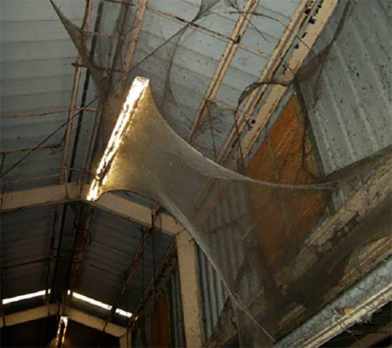 Spider webbing in Baltimore Wastewater Treatment Plant: 4-acre and 100 millions spiders. Disgusting!, 4-acre spider web, largest spider web in the world: Baltimore, largest spider web: 4-acres and 100 millions spiders, 4-acre spider web photo, 4-acre spider web picture, 4-acre spider web story, 4-acre spider web Baltimore Wastewater Treatment Plant, giant spider web baltimore maryland, giant Giant spider web in Baltimore: 4-acre and containing more than 100 millions spiders. Incredible!, spider, spider web, spider plague, spider infestation, spider web baltimore