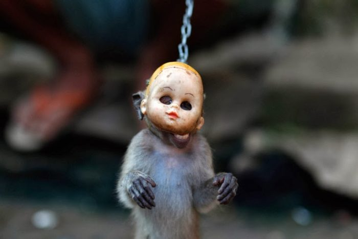 Mask Monkeys In Kampung Monyet Jakarta Strange Sounds
