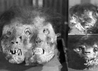 Three-faced demon mummy, Three-faced demon at Zengyōji (善行寺) temple, demon mummies, demon mummies japan, japanese demon mummies in Japan buddhist temples, buddhist demon mummies photo, picture of demon mummies japan, Three-faced demon at Zengyōji (善行寺) temple, Three-faced demon mummy picture