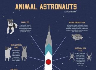 animal astronauts, animal in space, space experiments with animal, animal sent to space, infographics animal in space, Laika dog in space, First animal in space: Laika, Laika sputnik 2 nov 3, first animal in spce laika video, animal in space video