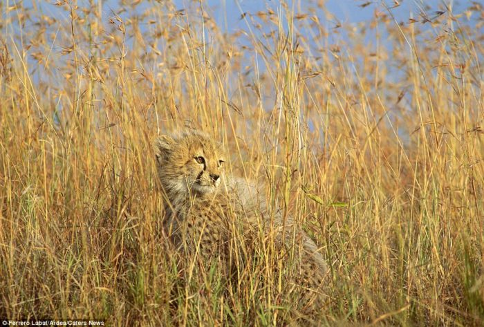 animal camouflage picture, animal camouflage, best animal camouflage photo, amazing animal camouflage, animal camouflage picture, animal camouflage photo, animal camouflage video,