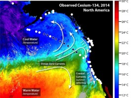 fukushima radioactivity reaches US coast, Radiation From Fukushima Reaches US West Coast, fukushima ceasium 134 california, fukushima vs california, fukushima pollution in usa, fukushima radioactivity california coast