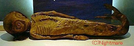 mermaid, mummy, mermaid mummy, mummified mermaidmermaid mummy japan, mermaid picture, mermaid video