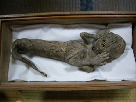 Unknown mermaid mummy in wooden box at Karukayado Temple, A screaming mermaid mummy at Myouchi Temple, Japan, screaming mermaid mummy, alien mermaid mummy, This mermaid mummy at Zuiryuji Temple in Osaka has the head of an alien and the body of a fish! Amazing!, Mysterious and terrifying mermaid mummy. Stuuf of nightmares, Mermaid mummy, Mermaid mummies, terrifying mermaid mummies, real mermaid mummies, amazing mermaid mummy, mermaid mummy japan, japanese mermaid mummies, Mermaid mummy at the National Museum of Ethnology, Leiden, mermaid, mermaid mummy, mermaid mummies, mermaid mummy japan, terrifying mermaid mummy buddhist temples, mummy, mummies,