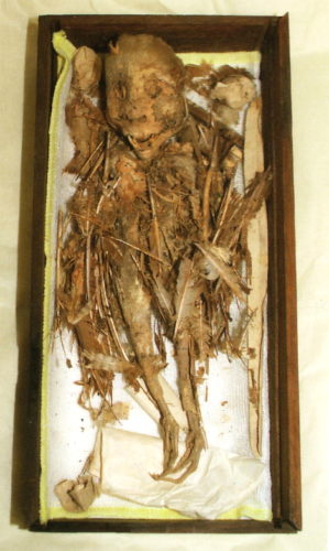 tengu, tengu demon, tengu mummy, tengu demon mummy, tenguy monster mummy, tengu mummy photo, The Tengu mummy at Hachinohe Museum. Feathers, bird feet and human skull! OMG!