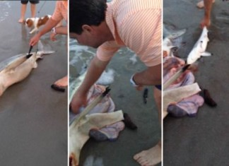 Dead shark gives birth to 3 babies in Cape town South Africa, dead shark babies, dead shark pups SA, man saves baby sharks from dead mother, 3 baby sharks saved from dead mother, Dead shark gives birth to 3 babies in Cape town South Africa