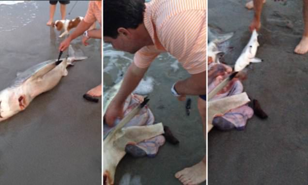 Dead shark gives birth to 3 babies in Cape town South Africa, dead shark babies, dead shark pups SA, man saves baby sharks from dead mother, 3 baby sharks saved from dead mother, Dead shark gives birth to 3 babies in Cape town South Africa, 3 Baby Sharks Rescued From Dead Mother VIDEO, samaritan saves 3 baby sharks from dead mother on video, Dead shark gives birth to 3 babies in Cape town South Africa, dead shark babies, dead shark pups SA, man saves baby sharks from dead mother, 3 baby sharks saved from dead mother, Dead shark gives birth to 3 babies in Cape town South Africa, This video is a good example of respect to all forms of life. DEAD SHARK GIVES BIRTH TO 3 BABY SHARKS WITH HELP OF GOOD SAMARITAN ON THE BEACH.
