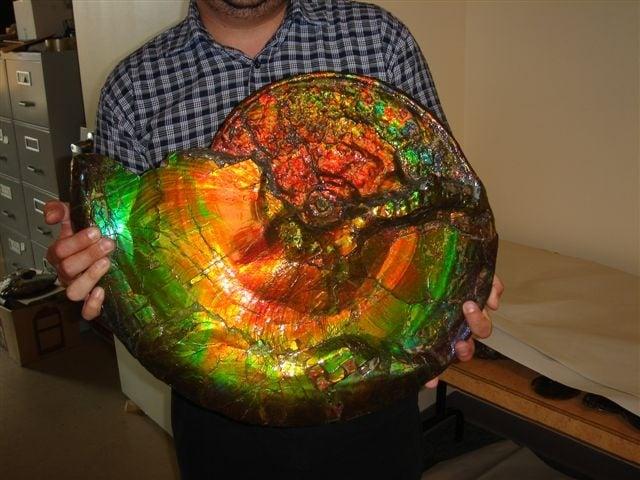 Fossilized Opal, opal fossil, opal fossil snails, amazing opalized snail, amazing ammonite