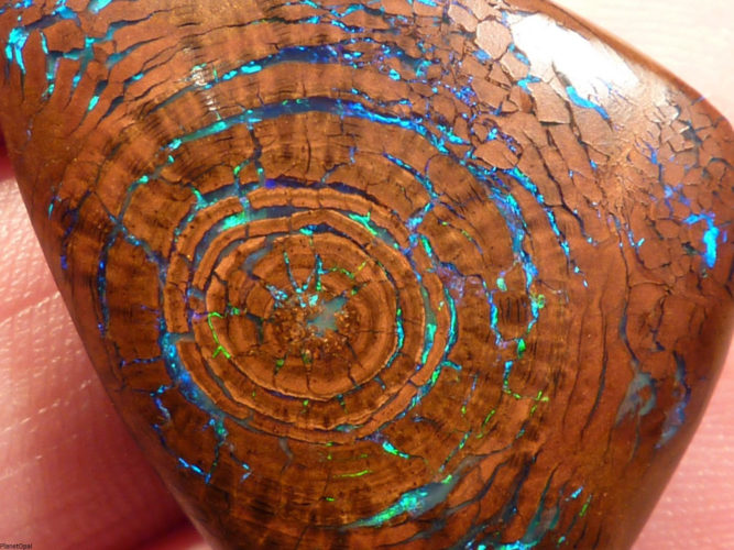 tree fossil with opal growth rings