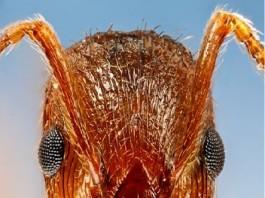 fire ant raft, fire ant, fire ant raft video, fire ant raft video, you can't drown fire ants, fire ants build rafts on water water fire ants, fire ant raft behavior, fire ant weird behavior,