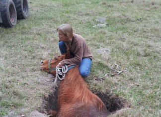 horse sinkhole oxford florida, horse trapped in sinkhole florida, florida sinkhole swallows horse, horse swallowed by sinkhole in oxford florida, oxford sinkhole horse florida