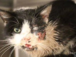 miracle cat florida, Bart the Miracle cat , miracle cat zombie florida Bart the Miracle cat, 'Dead' cat claws out of grave and comes home 5 days after being buried, Miracle cat claws its way out of own grave 5 days after burial, Cat comes back from the dead, zombie cat florida, miracle cat florida,