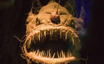 Anglerfish, Anglerfish strange, Anglerfish deep ocean