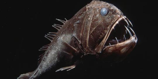 Fangtooth, Fangtooth deep ocean