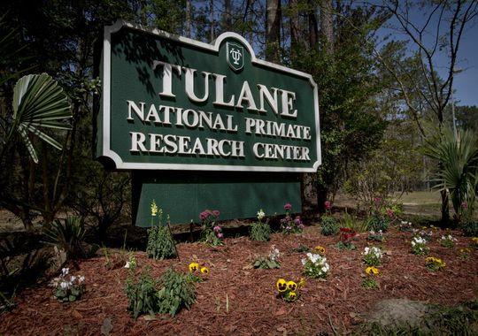 Deadly bacteria escapes lab in Covington, Deadly bacteria released from Louisiana lab, tulane primate laboratory bacteria release