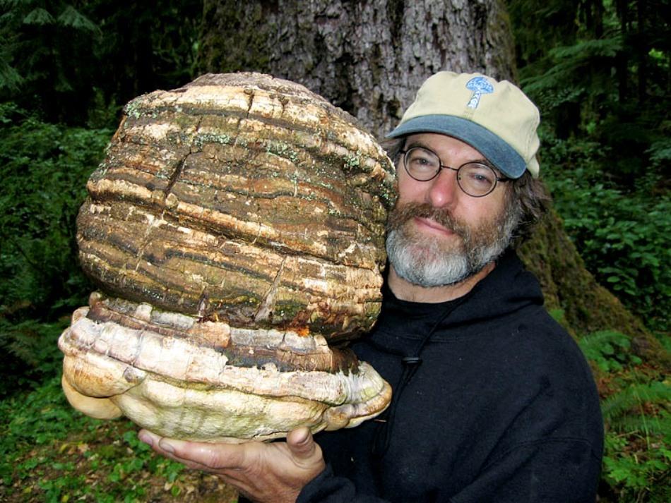 Paul Stamets and his magic mushroom, Paul Stamets mushroom, Paul Stamets mushroom vs pesticides, Paul Stamets mushroom against pesticides