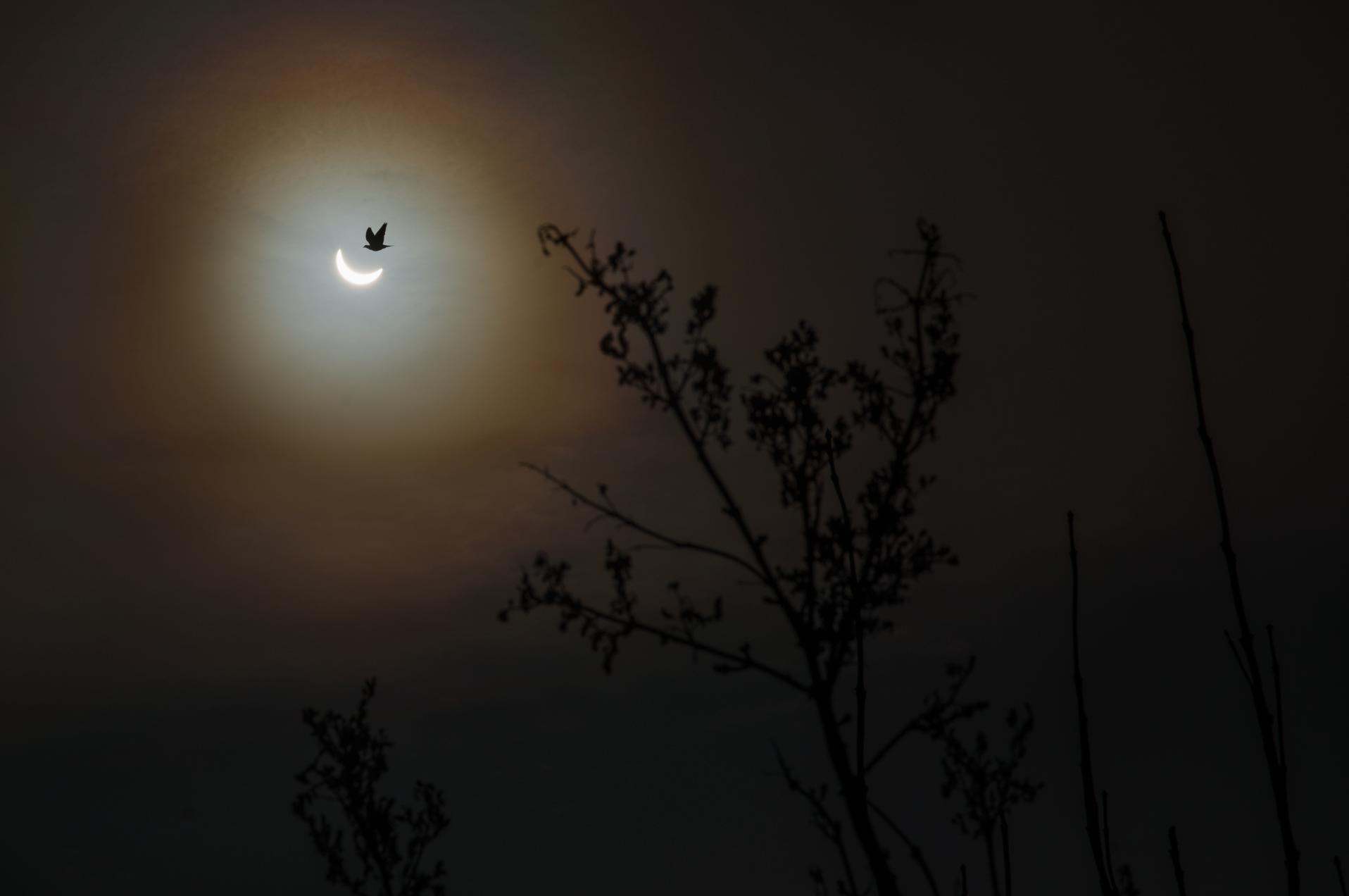 Solar eclipse from a back garden in Leicestershire, England