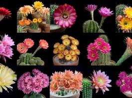 cactus bloom, cactus bloom video, cactus bloom vimeo, cactus bloom youtube, colors of cactus bloom video, video of cactus bloom, cactus bloom freaky flowers