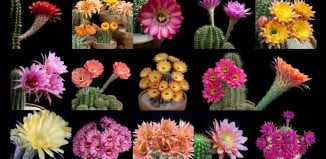 cactus bloom, cactus bloom video, cactus bloom vimeo, cactus bloom youtube, colors of cactus bloom video, video of cactus bloom, cactus bloom freaky flowers