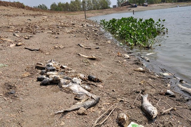 50 tons of fish die mysteriously in Ba Long Lake, fish mass die-off vietnam lake, dead fish vietnam, fish mass die-off vietnam, mystery fish kill vietnam, 50 tons of fish dead in lake in vietnam