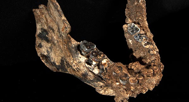 New fossil discovery restructures human evolution, A 2.8-million-year-old jawbone found in Ethiopia is rewriting the evolutionary history of Humans., A 2.8-million-year-old jawbone found in Ethiopia is rewriting the evolutionary history of Humans., New Jawbone fossil discovery restructures human evolution, human evolution rewritten through new fossil, A 2.8-million-year-old jawbone found in Ethiopia is rewriting the evolutionary history of Humans showing that ancient humans are half a million years older.