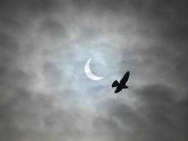 solar eclipse picture march 20 2015, solar eclipse picture march 20 2015 birmingham, solar eclipse picture march 20 2015 uk