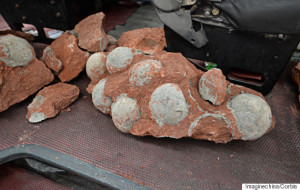 Dinosaur egg discovered china april 2015, Dinosaur egg fossils found during road works in southern China, Dinosaur egg Heyuan, Fossilised dinosaur eggs found by construction workers  in Heyuan city, fossilized Dinosaur eggs in China, dinosaur eggs discovered in China april 2015, construction workers discover dinosaur eggs in Hometown of the Dinosaur in China, Hometown of the Dinosaur in China eggs, heyuan dinosaur eggs april 2015