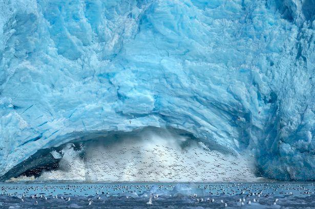 iceberg collapse birds, feeding frenzy, feeding frenzy birds, feeding frenzy birds norway