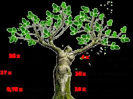 moringa, moringa oleifera, moringa power, moringa oleifera power