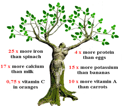 moringa, moringa oleifera, moringa power, moringa oleifera power, Moringa, Moringa survival, buy Moringa, moringa plant, Moringa shrub, Moringa: Preppers new favorite superfood, Moringa is the favorite superfood of doomsday preppers