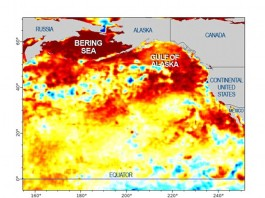 mystery blob pacific ocean, mysterious blob temperature anomaly pacific ocean, california drought triggered by blob in pacific ocena, pacific ocean blob enhances california drought, california drought blob pacific ocean, pacific ocean blob temperature anomaly, temperature anomaly pacific ocean