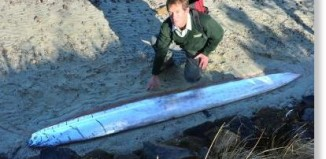 oarfish aramoana NZ, oarfish april 2015, oarfish found in salt marsh New Zealnad, Rare deep sea oarfish washes up on marsh in Aramoana, april 2015 oarfish NZ, oarfish NZ 2015